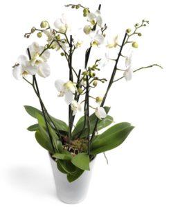 1.Συνθέσεις Φυτών