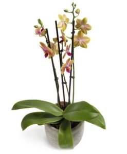 23.Φυτά για εγκαίνια