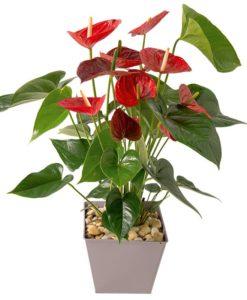 Ανθοπωλεία γιά Πειραιάς,flowershops, piraeus flowers store, peiraias flower