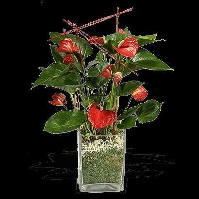 Αποστολή λουλουδιών & Δώρων Αυθημερόν
