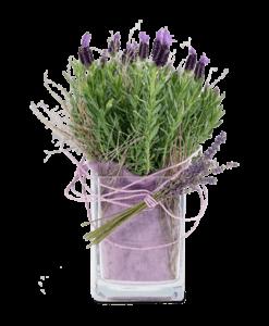 Φυτα σε γυαλινη βαση levanta