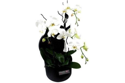Συνθέσεις λουλουδιών, μπουκέτα, καλάθια δώρων, φυτά. Παράδοση αυθημερόν. Online