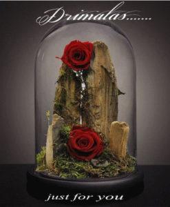 τριανταφυλλο σε γυαλα αθηνα,τριαντάφυλλο που ζει για πάντα, forever roses,Τριαντάφυλλα που ζουν για πάντα, αθάνατα τριαντάφυλλα, αιώνια τριαντάφυλλα, τριαντάφυλλα