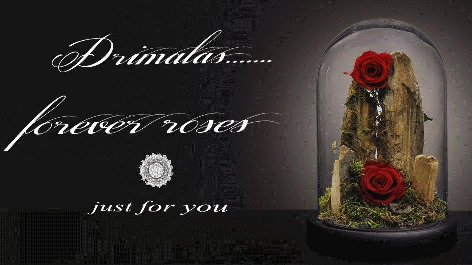 Forever roses τριαντάφυλλα για πάντα,φυσικά τριαντάφυλλα για χρόνια