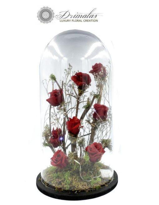 """Τριαντάφυλλα για """"πάντα"""""""