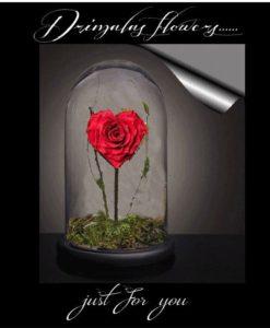 Αληθινά Αφυδατωμένα Τριαντάφυλλα | Τριαντάφυλλα που ζουν για πάντα!