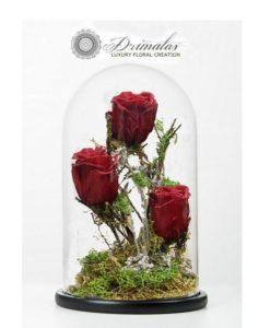 τριαντάφυλλα για πάντα