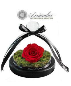 Forever Roses - Τριανταφυλλα για παντα - eternity roses-forever roses
